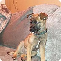 Adopt A Pet :: Gordon - Brooklyn Center, MN