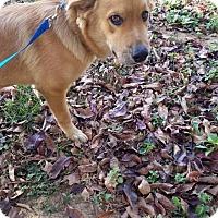 Adopt A Pet :: Jimmy - Pittsburgh, PA