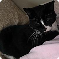 Adopt A Pet :: Friskie - Plainville, MA