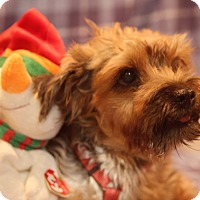 Adopt A Pet :: Alf - Newtown, CT
