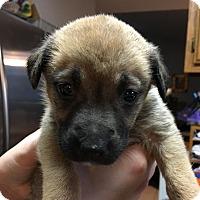 Adopt A Pet :: Cruz - Oakley, CA