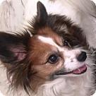 Adopt A Pet :: Asia (age 8) in GA