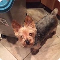 Adopt A Pet :: DJ - N. Babylon, NY
