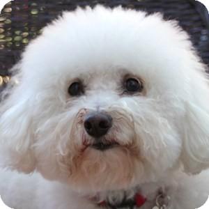 jackson adopted dog bfk201312061 los angeles la