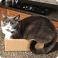 Adopt A Pet :: Penelope - N. Billerica, MA