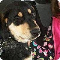 Adopt A Pet :: Luke - Surrey, BC