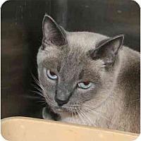 Adopt A Pet :: Rascal - Columbus, OH