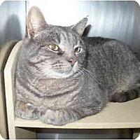 Adopt A Pet :: Frankie - Colmar, PA