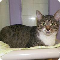 Adopt A Pet :: Zena - Dover, OH