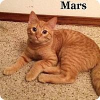 Adopt A Pet :: Mars - Bentonville, AR