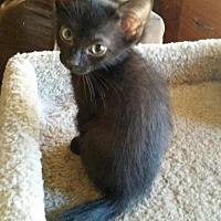 Adopt A Pet :: Batty - Phoenix, AZ