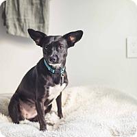 Adopt A Pet :: Heddie is Magical - Los Angeles, CA