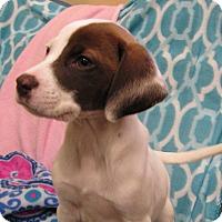 Adopt A Pet :: Mia - Charlemont, MA