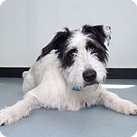 Adopt A Pet :: Koontz - Sudbury, MA