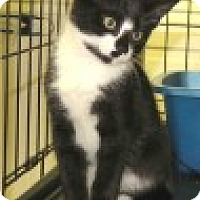 Adopt A Pet :: Mocha - Middletown, CT