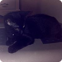 Adopt A Pet :: Alec - Richmond, VA