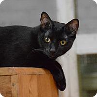 Adopt A Pet :: Sandro - Brooklyn, NY