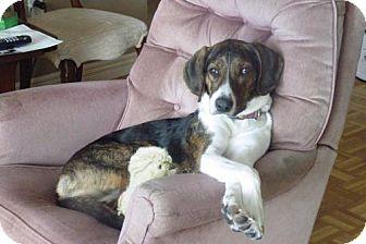 Hound (Unknown Type)/Coonhound Mix Dog for adoption in Toronto, Ontario - Rico