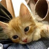 Adopt A Pet :: Marconi - River Edge, NJ