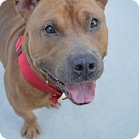 Adopt A Pet :: Mario - Prince George, VA