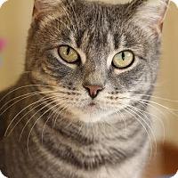 Adopt A Pet :: Meeka - Frankfort, IL
