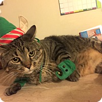 Adopt A Pet :: Fable - Addison, IL