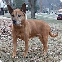 Adopt A Pet :: Ginger - Cincinnati, OH