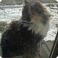 Adopt A Pet :: Mustachie* - Trexlertown, PA