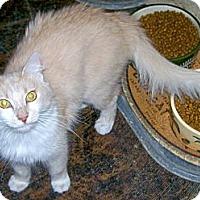 Adopt A Pet :: Gypsy Rose - Scottsdale, AZ