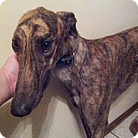 Adopt A Pet :: Sennaro - Lexington, SC