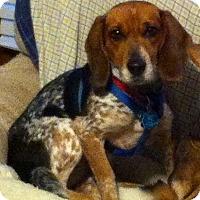 Adopt A Pet :: Honey - Marion, AR