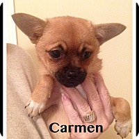 Adopt A Pet :: Carmen - Indian Trail, NC