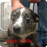 Adopt A Pet :: Judith - baltimore, MD