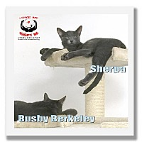 Adopt A Pet :: The Blues Brothers - Palm Desert, CA