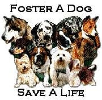 Shepherd (Unknown Type)/Terrier (Unknown Type, Medium) Mix Dog for adoption in Chino, California - Foster 4 Us/ Volunteer.