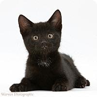 Adopt A Pet :: Jett - Brockton, MA