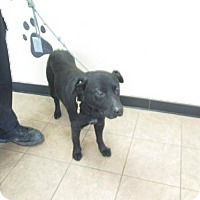Adopt A Pet :: RICK - Marion, OH