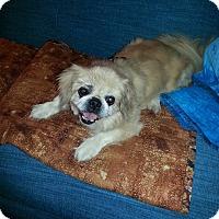 Adopt A Pet :: Oscar - Chantilly, VA