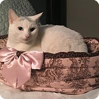 Adopt A Pet :: Anita - Cleveland, OH