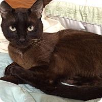 Adopt A Pet :: Chaco - Brattleboro, VT