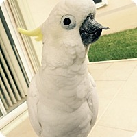 Adopt A Pet :: Charlie - Tampa, FL