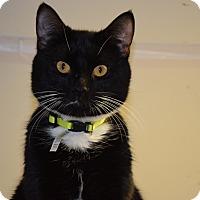 Adopt A Pet :: Baby - Pottsville, PA