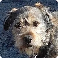 Adopt A Pet :: Benji - MINNEAPOLIS, KS