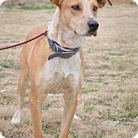 Adopt A Pet :: Dipper - Midland, TX