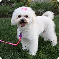 Adopt A Pet :: EFFY - Newport Beach, CA