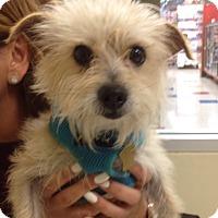 Adopt A Pet :: Rusty - Studio City, CA