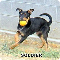 Adopt A Pet :: Soldier (Puppy) - Lindsay, CA