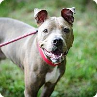 Adopt A Pet :: Benji~meet me!~new pics! - Glastonbury, CT