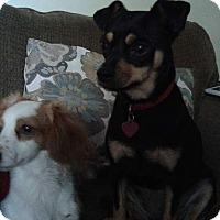 Adopt A Pet :: Ellie Mae - Salem, OR