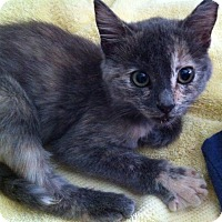 Adopt A Pet :: LITTLE STAR - Brea, CA